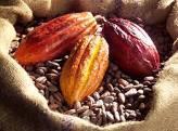 15 cacao