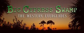 18 big cypress swamp
