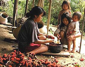 20061204 achuarfruit