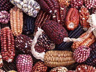 330px peruvian corn