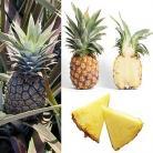 7 owoce ananas