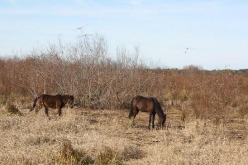 Alachua prairie