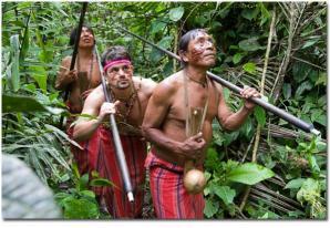 Amazonica 04
