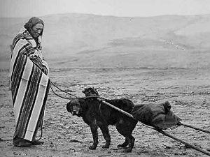 Deplacement des travois avec des chiens