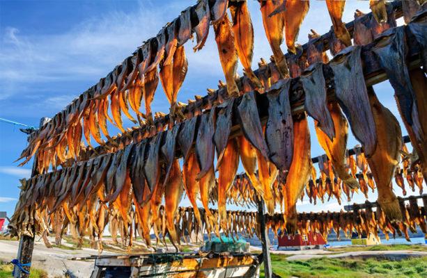 Greenland fish