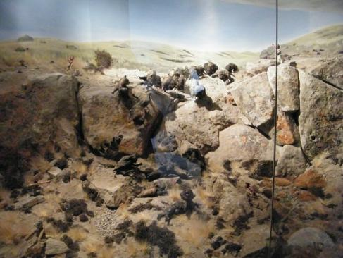 Head smashed in buffalo jump diorama claresholm