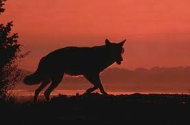 Royaume du loup