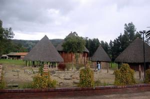 Silva museo