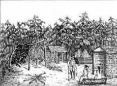 Village d apalachicola