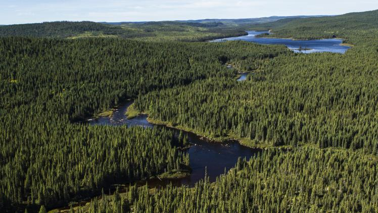 What is the canadian boreal forest